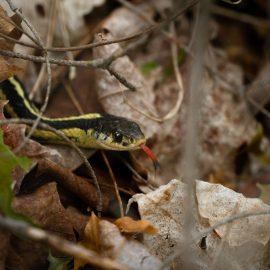 chelsea-marcantonio-photography-snake-park