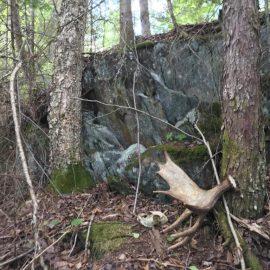 park-wildlife-moose-antler